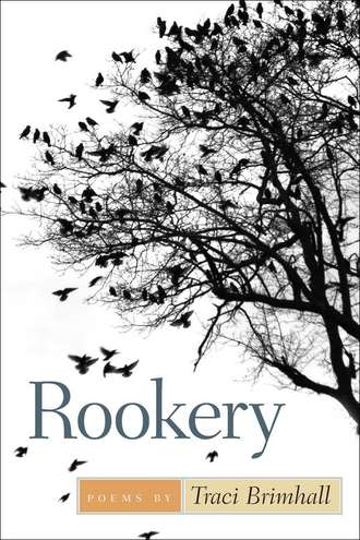 rookery-cover